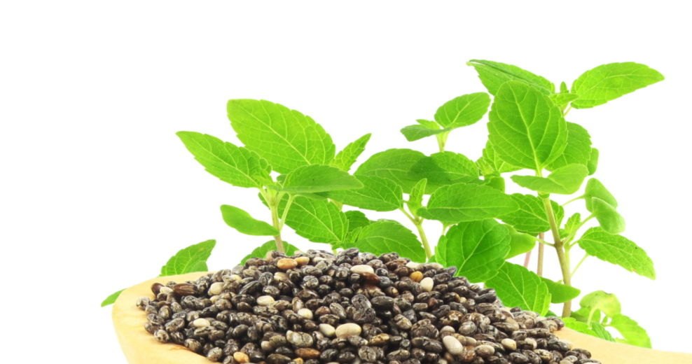 Chia Seed Oil – A natural Treasure Chest