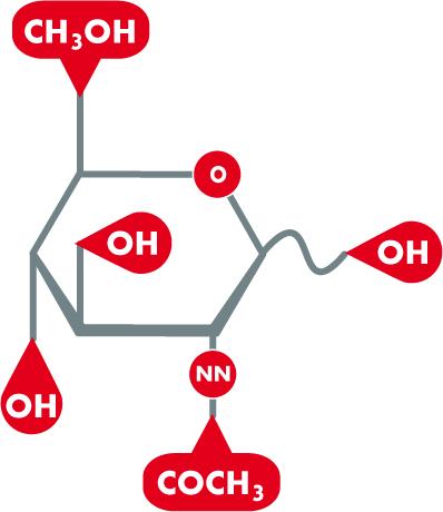 Acetylglucosamin; Hyafactor NAG, Hyaluronsäure