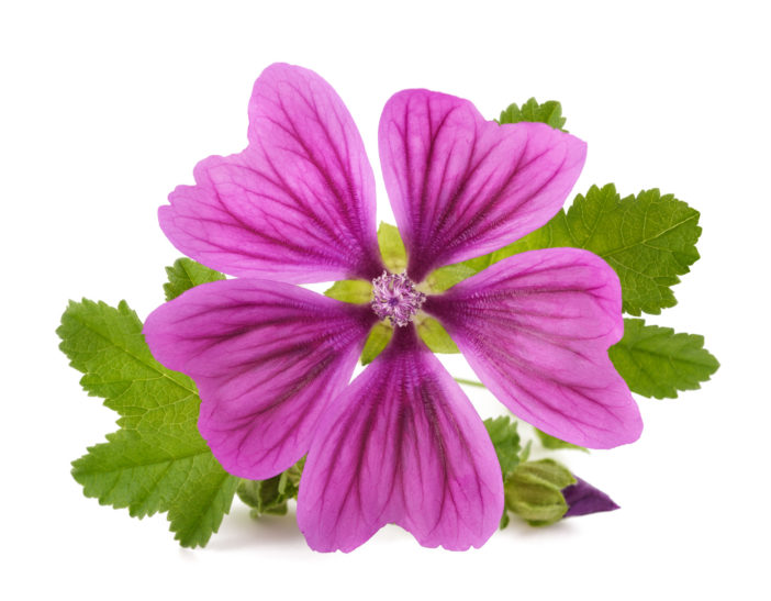Malve,Malva Sylvestris (Mallow) Flower Extract