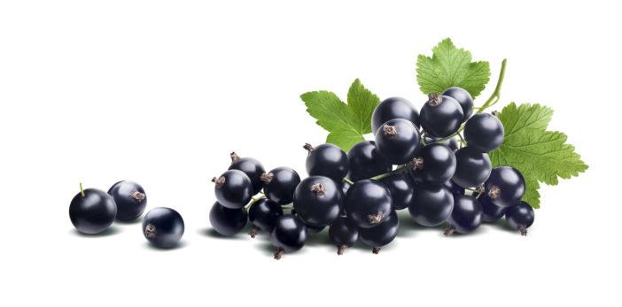 Ribes Nigrum (Black Currant) Seed Oil, Johannisbeersamenöl