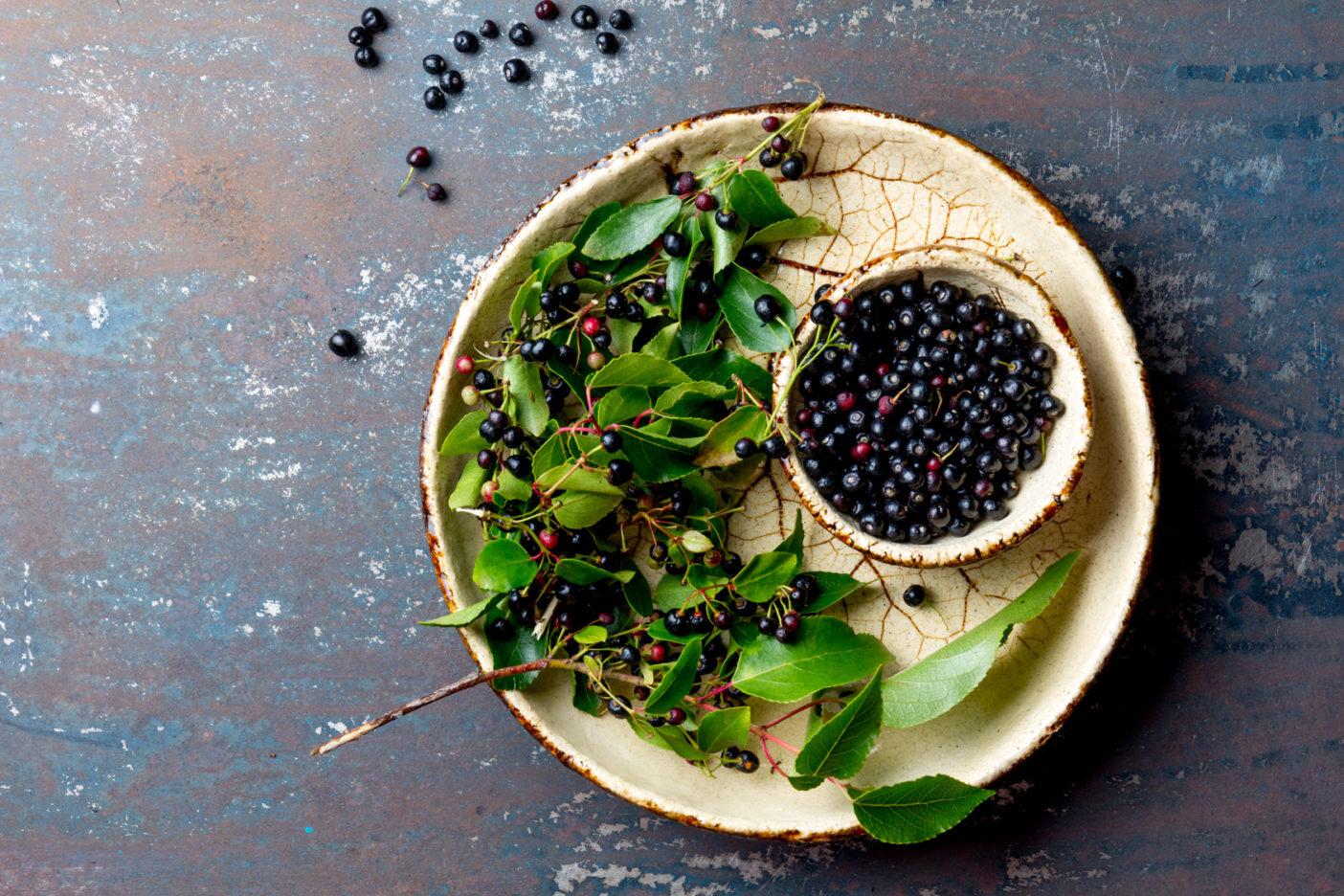 Maqui; Maquiextrakt; Maquibeeren; Aristotelia Chilensis Fruit Extract