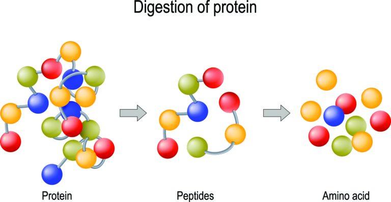 Peptide, Proteine, Aminosäuren