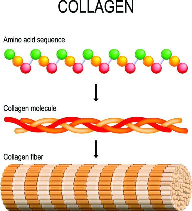 Hydrolyzed Collagen; soluble collagen