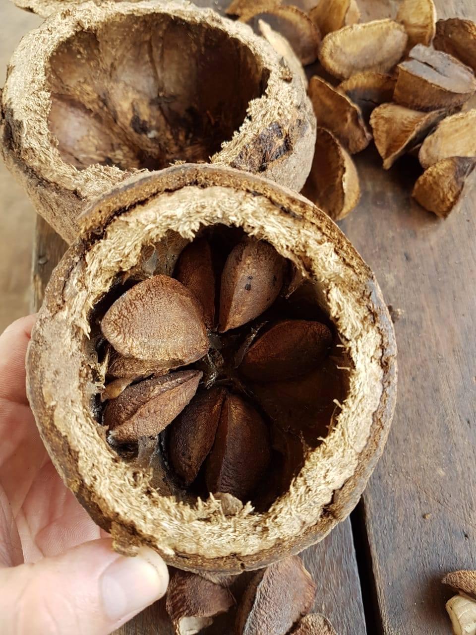 Bertholletia Excelsa Seed Oil