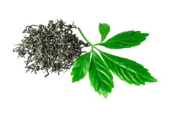 Unsterblichkeitspflanze, Gynostemma Pentaphyllum Leaf Extract